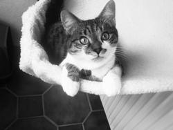 Frisson, chat Gouttière