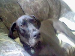 Flint, chien