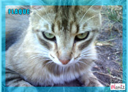 Flaque, chat