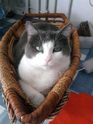 Misti, chat Gouttière