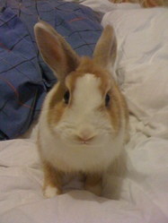 Lily, rongeur Lapin