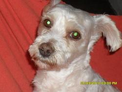 Nestor, chien