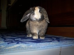 Apple, rongeur Lapin