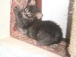 Zézé, chat Gouttière