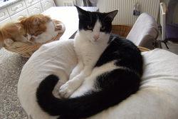Filou, chat Gouttière