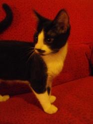 Minouchon, chat