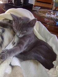 Rocco, chat Gouttière
