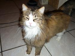 Galen, chat Gouttière