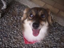 Titine, chien