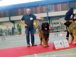 Fabio De La Plaine D'Anjou, chien Leonberger