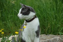 Faby, chat Gouttière