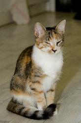 Faëleen, chat Gouttière