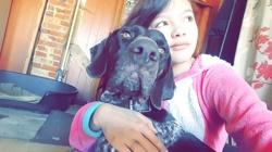 Falco, chien Braque allemand à poil dur