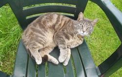 Faline, chat Gouttière
