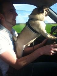 Falko, chien Carlin