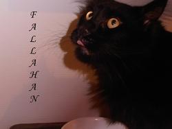 Fallahan, chat