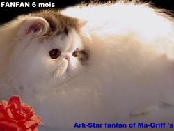 Fanfan, chat