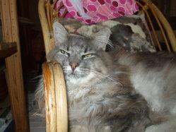Fanfan, chat Gouttière