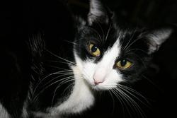 Fanny , chat Gouttière