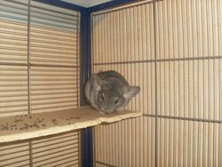 Fanny, rongeur Chinchilla