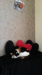 Fanny, chat Gouttière