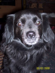 Fanny Bébé Pitchou, chien