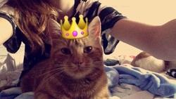 Fanta, chat Gouttière