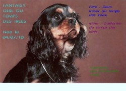 Fantaisy Girl, chien Cavalier King Charles Spaniel