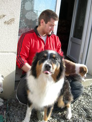 Fantasia, chien Berger australien