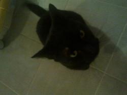 Fantomette, chat Gouttière