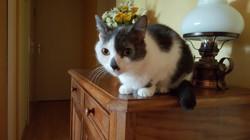 Fany, chat Gouttière