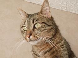 Fanzy, chat Gouttière