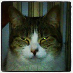 Farfouille, chat