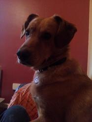 Faro, chien