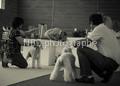 Farouk, chien Bedlington Terrier