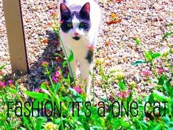 Fashion , chat