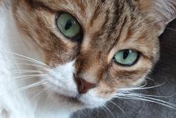 Fauvette, chat