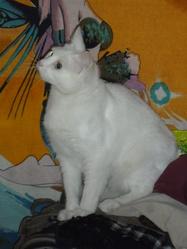 Faya, chat Gouttière