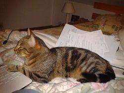 Faya N'Est Plus Là, chat Gouttière
