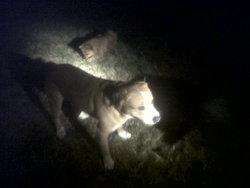 Rosco, chien