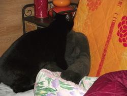 Pirouette, chat Gouttière