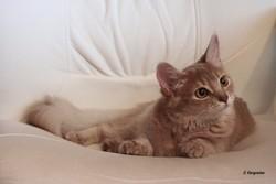 Féolynn, chat Somali