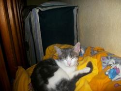 Friscette, chat