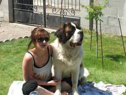 Cisko, chien Saint-Bernard