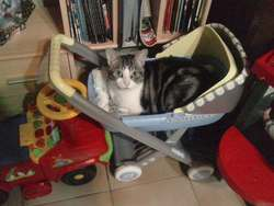 Pussy, chat Gouttière