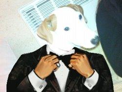 Exora, chien Jack Russell Terrier
