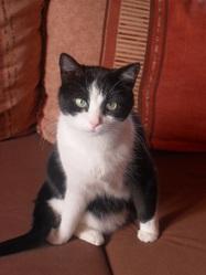 Lina, chat Gouttière