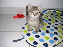 Lyna, chat Gouttière