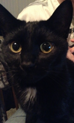 Fé-Lyx, chat Gouttière