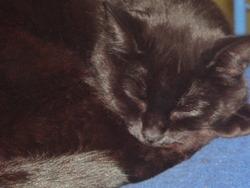 Bidul, chat Gouttière